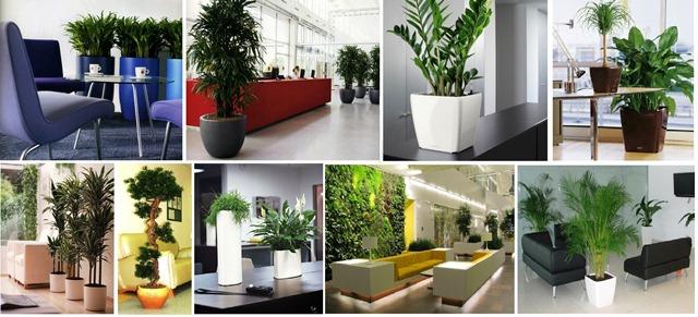 наши работы по озеленению офисов